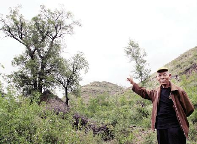 岳家庄村有棵800年的酸枣树